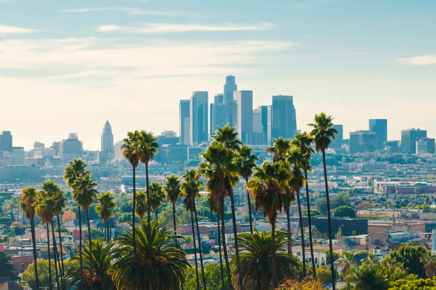 Skyline with iconic palm trees